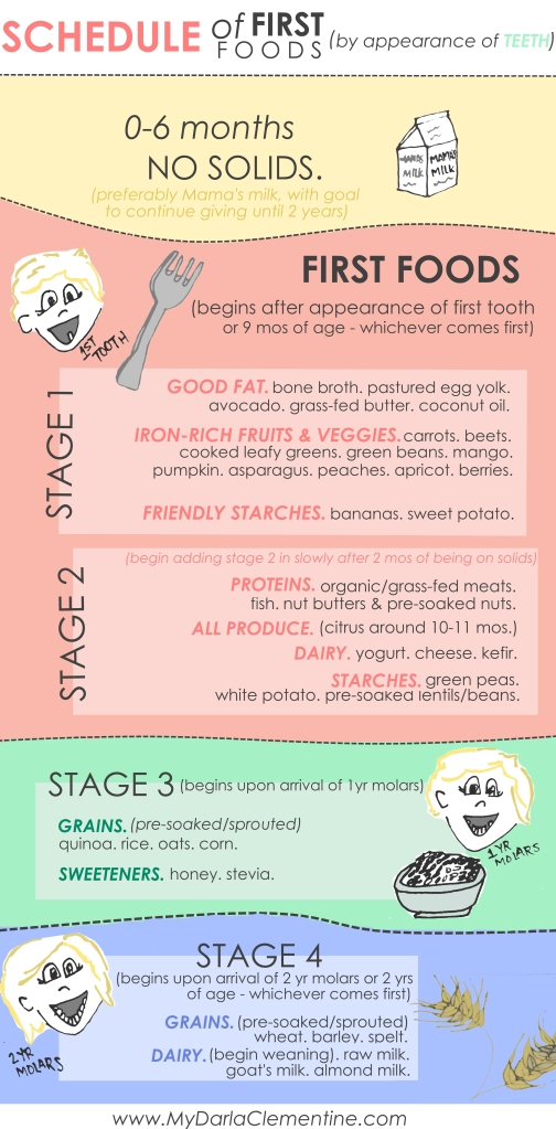 Timeline of First Foods by Appearance of Teeth - How to use molars and teeth to tell when your baby is ready to digest certain foods. The best first foods and when to introduce them throughout the first two years of life. By My Darla Clementine.